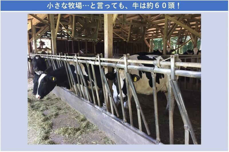 小さな牧場…と言っても、牛は約60頭!